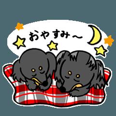 仲良しダックス ベル&ヒメ 2