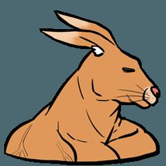 キュートな筋肉のカンガルー