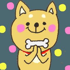 元気がでる言葉~柴犬ちゃん~