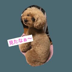 癒し犬ハピ