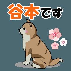 谷本さんが使う名前スタンプ・子犬イラスト
