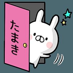【たまき】専用名前ウサギ