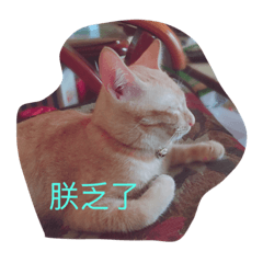 love cat life